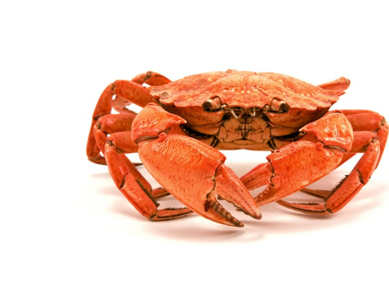 Tacoma-Waterfront-Association-crab-feed