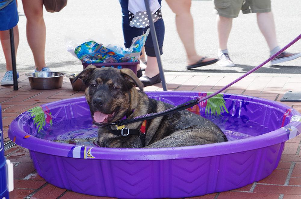 Brew-Five-Three-Tacoma-2016-dog