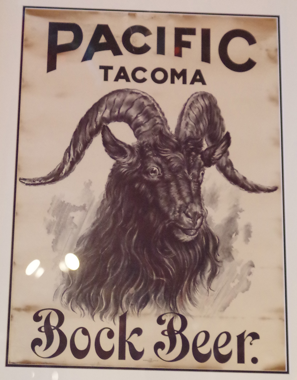 pacific-brewing-and-malting-co-tacoma-bock-beer